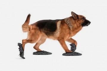 """""""Pet Sweep"""":有打掃功能的寵物拖鞋"""