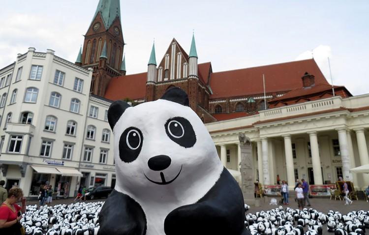 Panda_Roadshow_06