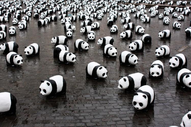 1600_pandas_(9)