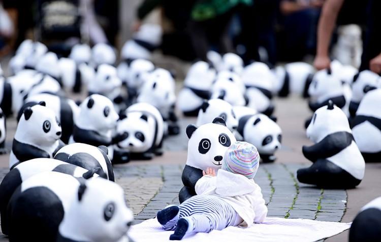 Panda_Roadshow_09