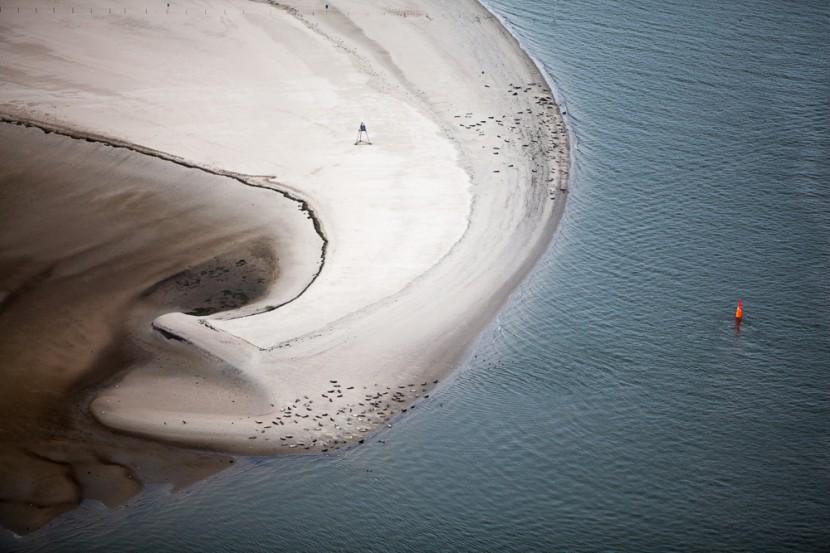 Seals on Beach, Baltrum, Germany 2011