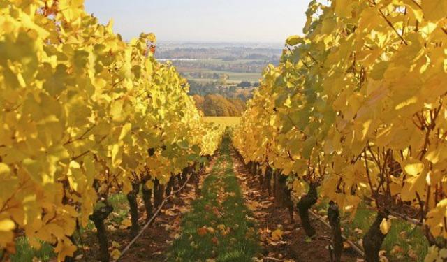 10 Best Wine Travel Destinations 2013 6