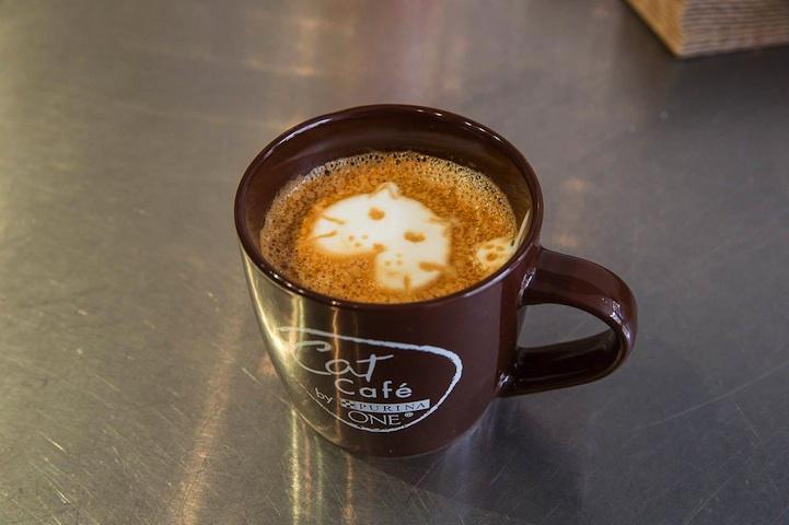 美國第一間貓咪Café開業啦! 1