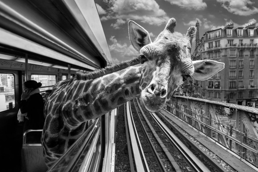 Amusing Photos Show What It Would Be Like If Animals Took The Paris Metro 1