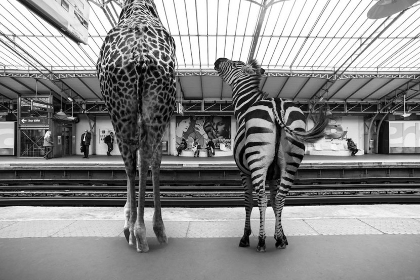 Amusing Photos Show What It Would Be Like If Animals Took The Paris Metro 2