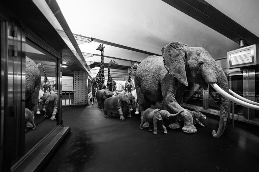 Amusing Photos Show What It Would Be Like If Animals Took The Paris Metro 3