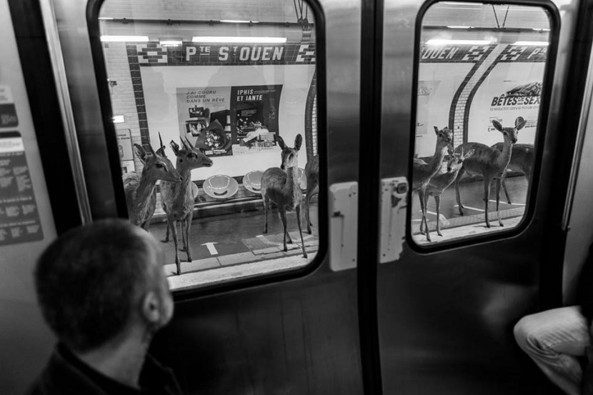 Amusing Photos Show What It Would Be Like If Animals Took The Paris Metro 4