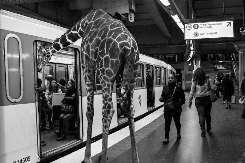 Amusing Photos Show What It Would Be Like If Animals Took The Paris Metro 5