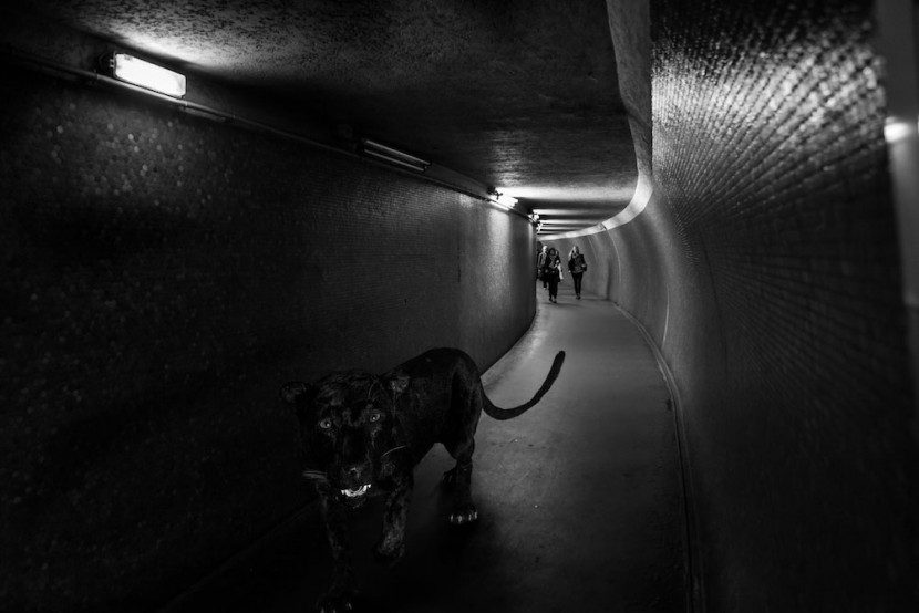 Amusing Photos Show What It Would Be Like If Animals Took The Paris Metro 6