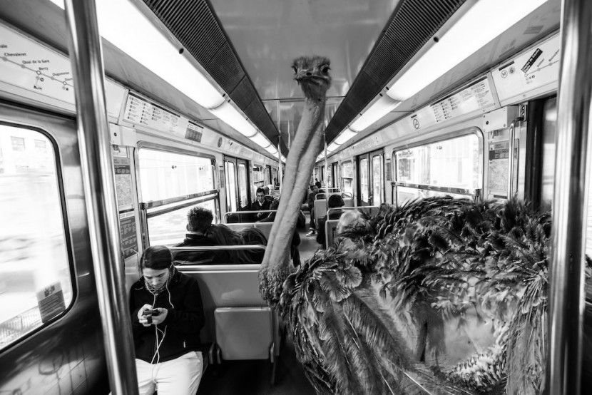 Amusing Photos Show What It Would Be Like If Animals Took The Paris Metro 8
