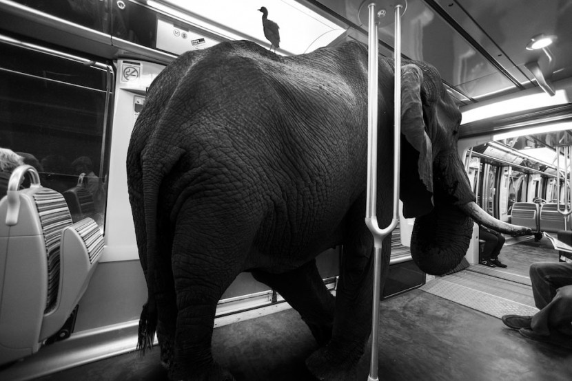 Amusing Photos Show What It Would Be Like If Animals Took The Paris Metro 11