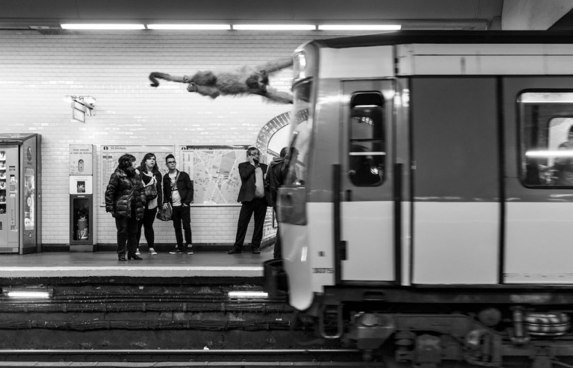 Amusing Photos Show What It Would Be Like If Animals Took The Paris Metro 12