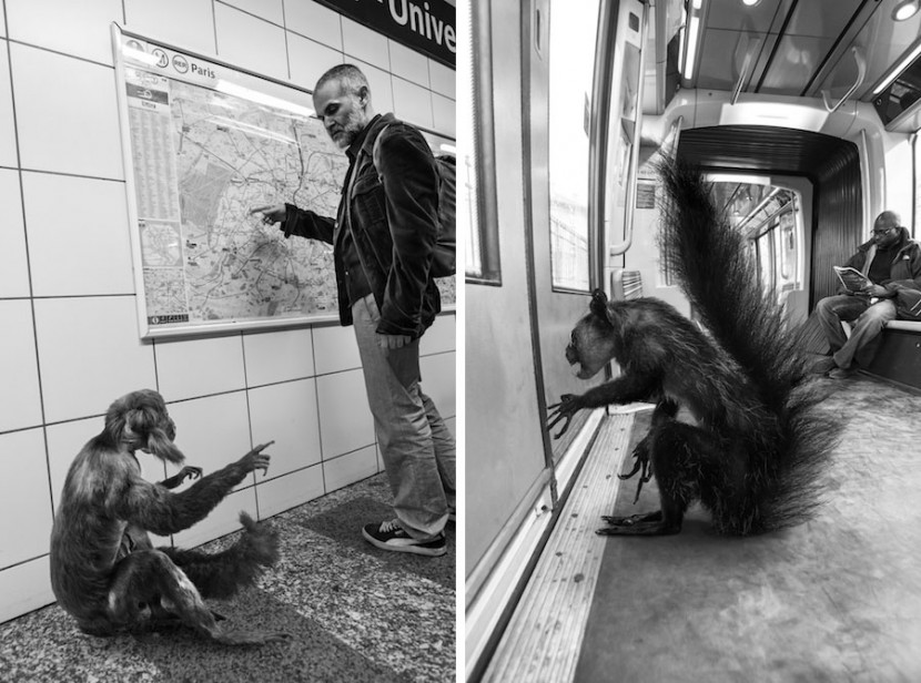 Amusing Photos Show What It Would Be Like If Animals Took The Paris Metro 14