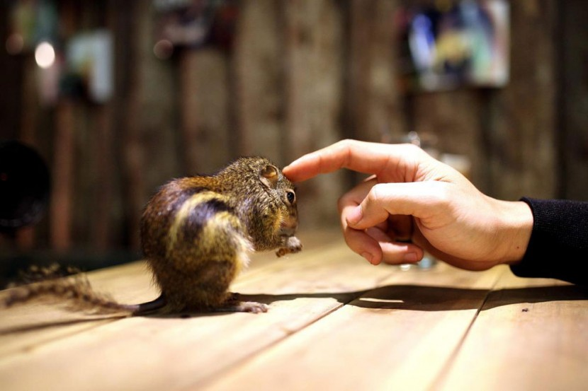 In Vietnam, A Pet Café That Houses Snakes, Iguanas & Other Exotic Creatures 2