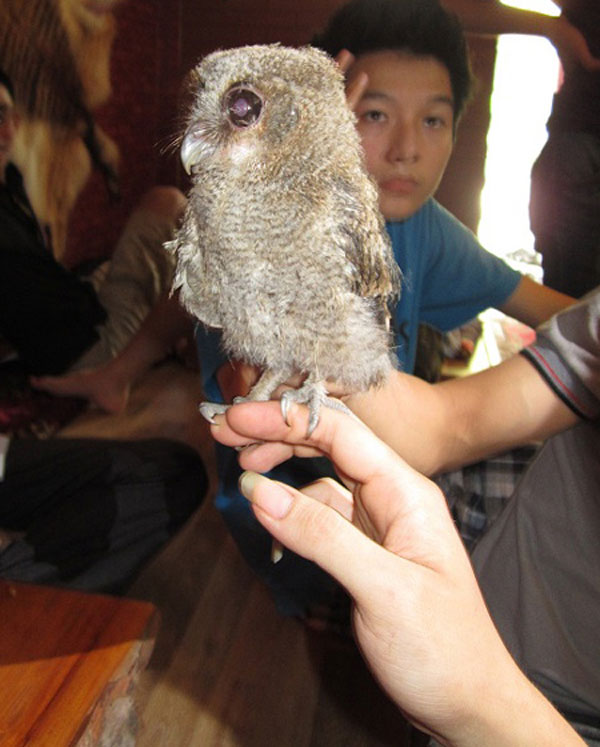In Vietnam, A Pet Café That Houses Snakes, Iguanas & Other Exotic Creatures 4