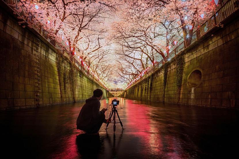 2014日本最美櫻花照 8