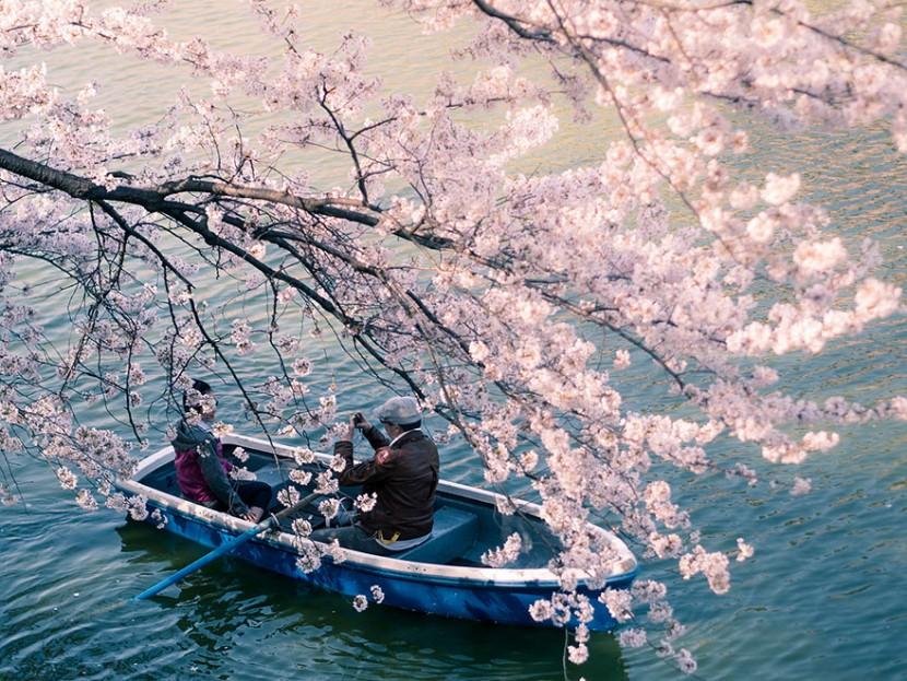 2014日本最美櫻花照 10