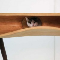 This Stylish Table Doubles As A Playground For Cats 6