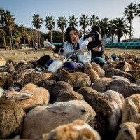 Visit Rabbit Island In Japan 12