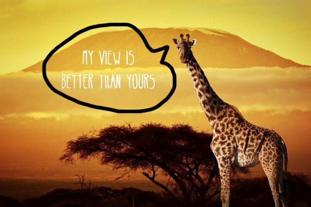愛上長頸鹿的22個理由 7