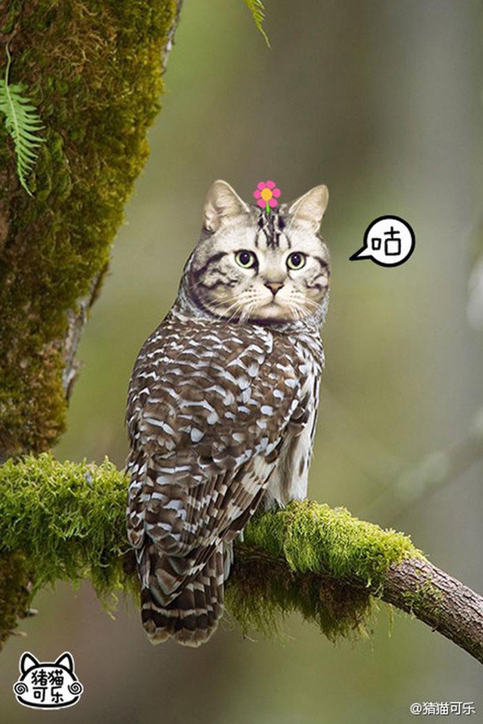 貓頭鷹真的變成貓了?!MEOWLS:頭貓+鷹身全新物種 9