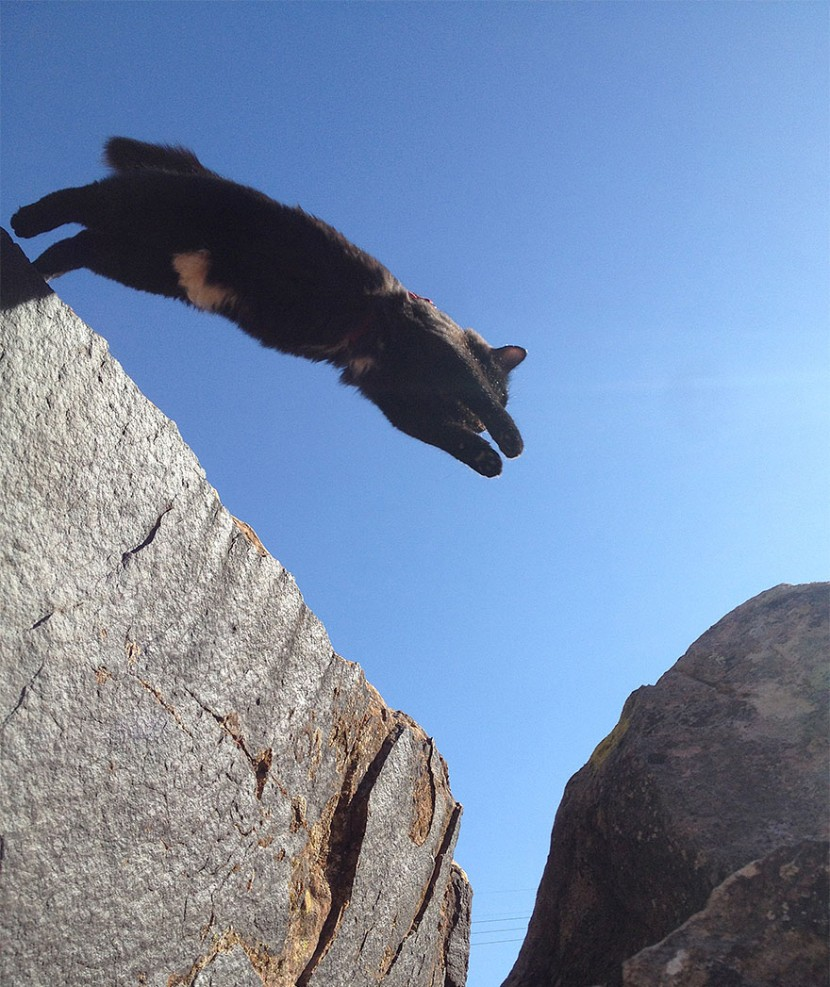My Adopted Cat Is The Best Climbing Partner Ever 4