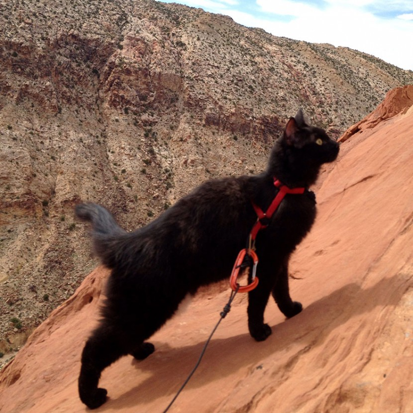 My Adopted Cat Is The Best Climbing Partner Ever 6