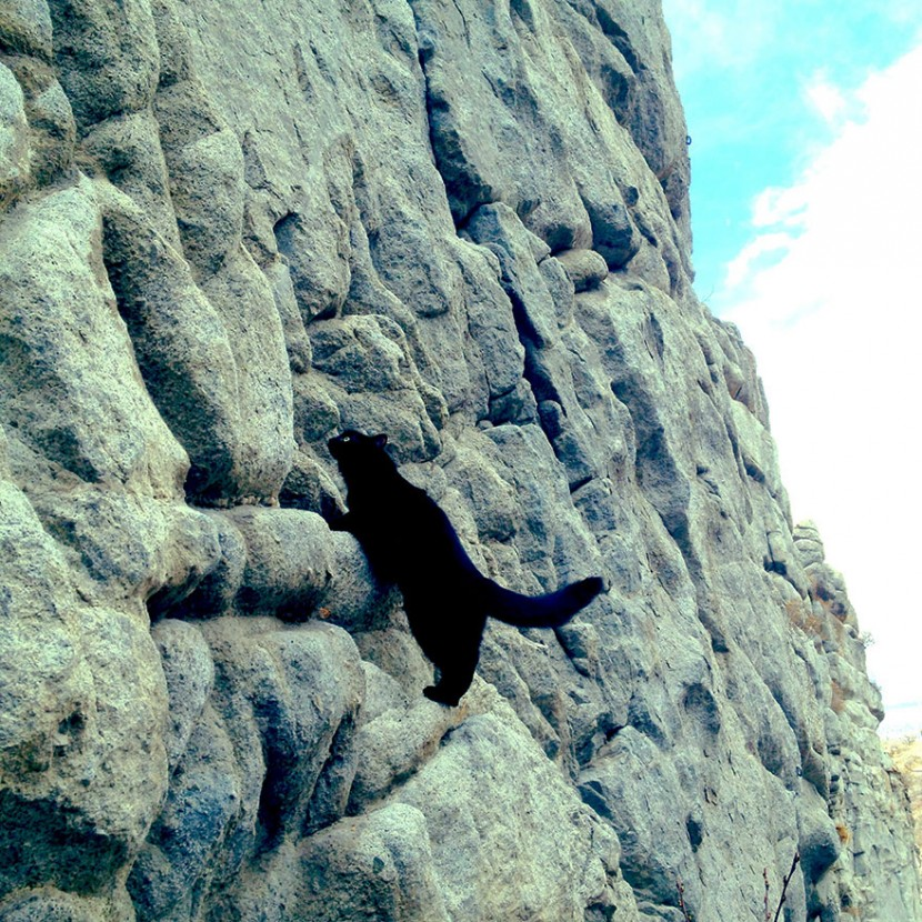 My Adopted Cat Is The Best Climbing Partner Ever 9