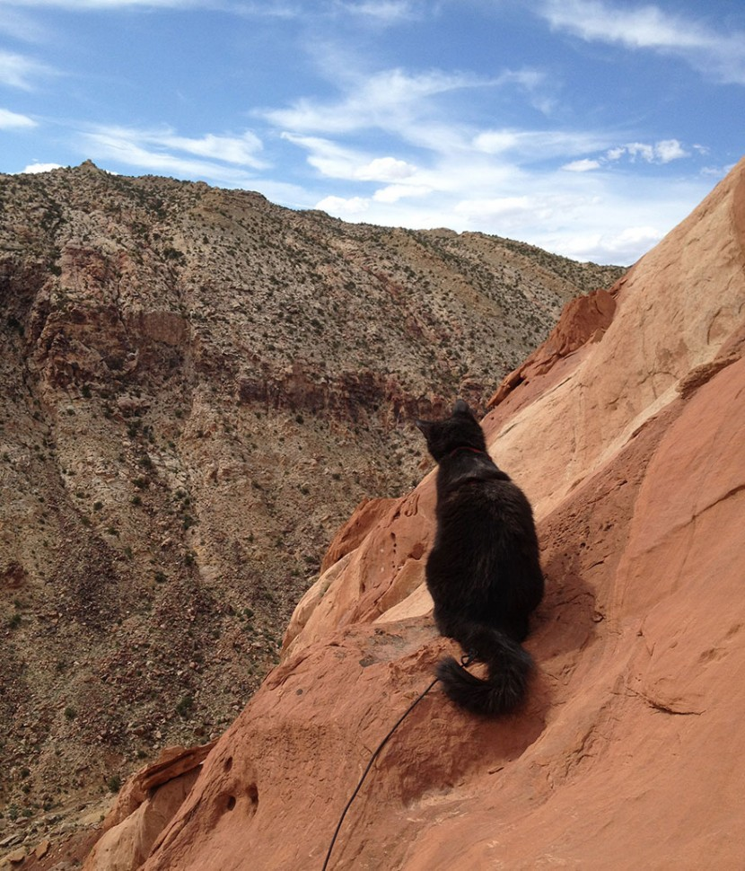 My Adopted Cat Is The Best Climbing Partner Ever 11