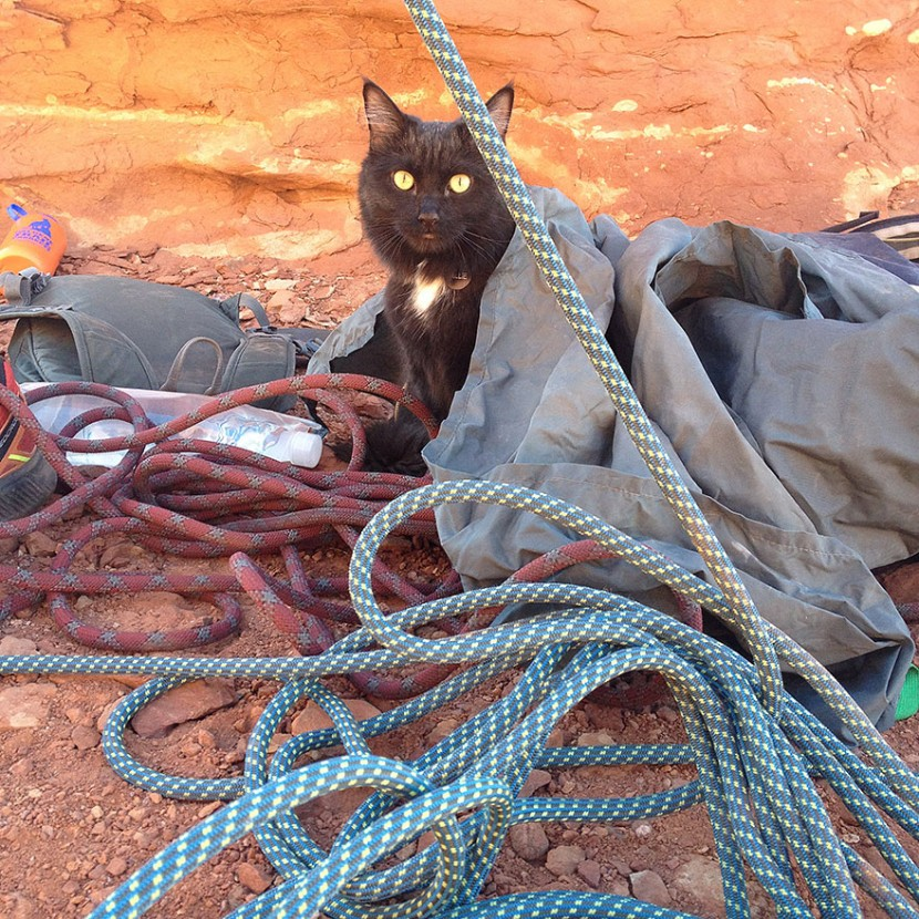My Adopted Cat Is The Best Climbing Partner Ever 14