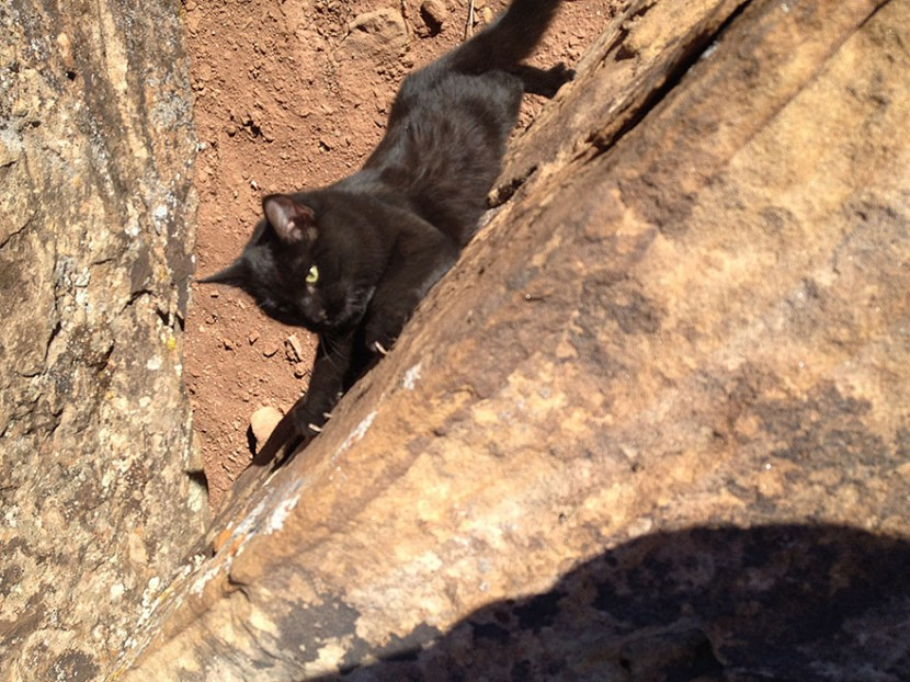 My Adopted Cat Is The Best Climbing Partner Ever 17