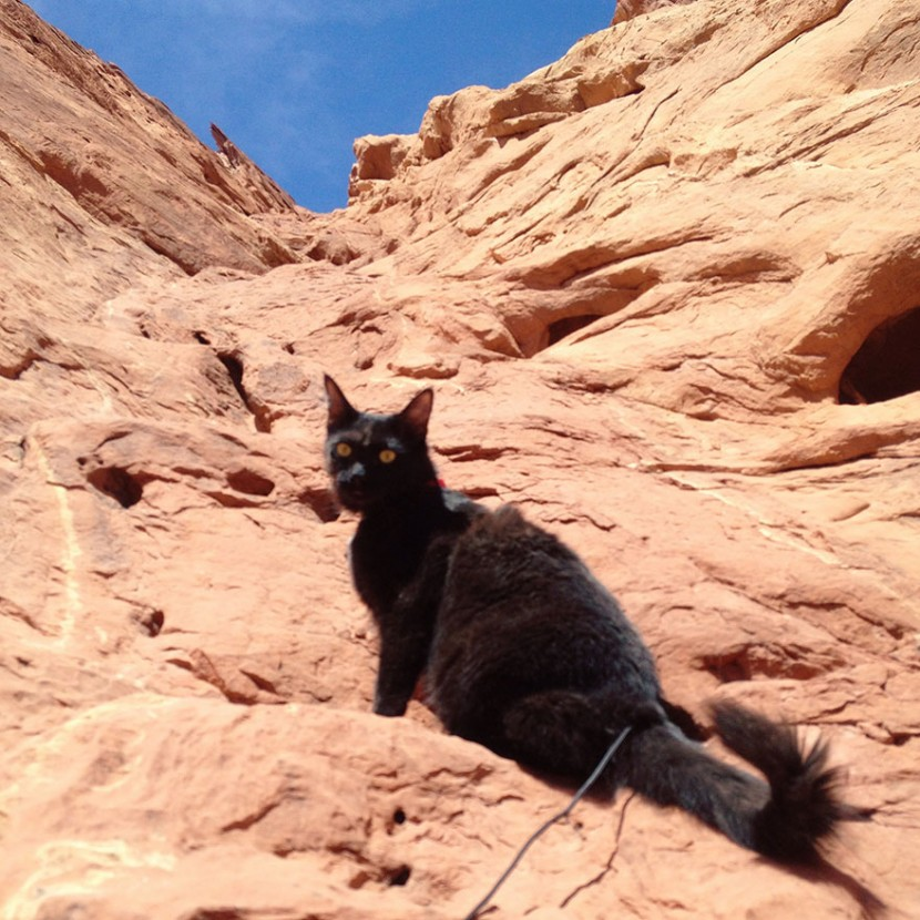 My Adopted Cat Is The Best Climbing Partner Ever 22