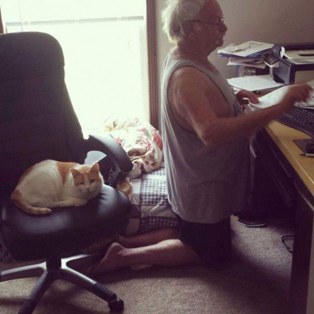 25 Reasons To Everyone Needs A Cat In Their Life 1