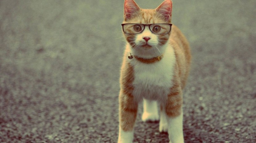 25 Reasons To Everyone Needs A Cat In Their Life 2