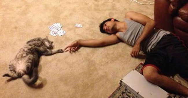 25 Reasons To Everyone Needs A Cat In Their Life 9
