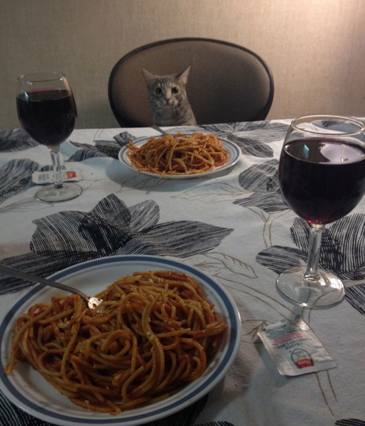 25 Reasons To Everyone Needs A Cat In Their Life 10