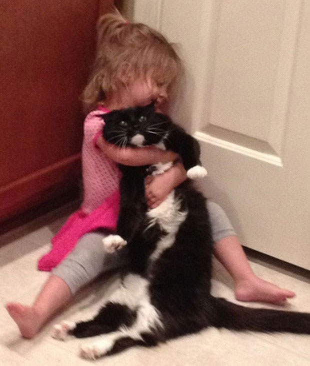 25 Reasons To Everyone Needs A Cat In Their Life 11