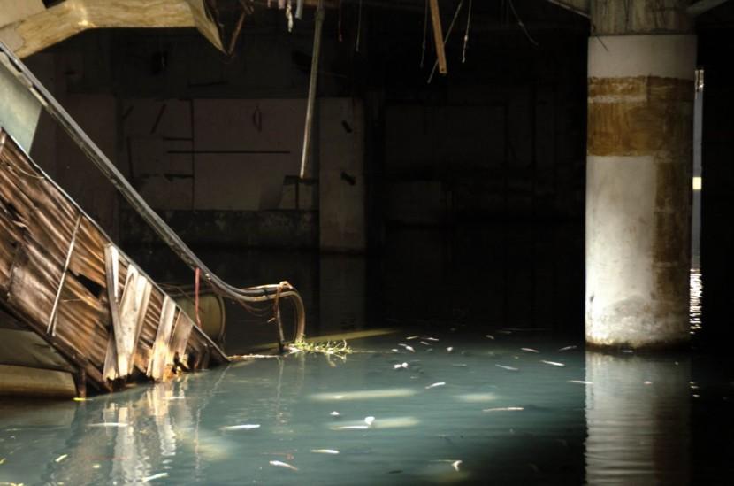 Abandoned Bangkok Shopping Mall Hides a Fishy Secret  1