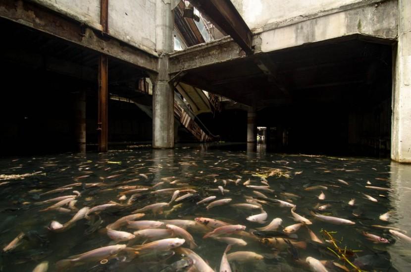 Abandoned Bangkok Shopping Mall Hides a Fishy Secret  3