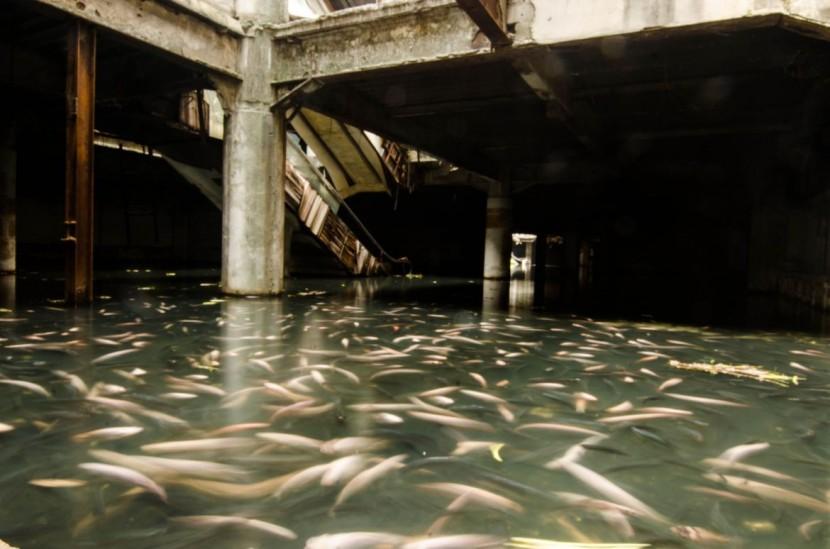 Abandoned Bangkok Shopping Mall Hides a Fishy Secret  5