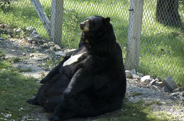 該減肥了!缺乏運動的動物大胖子 19