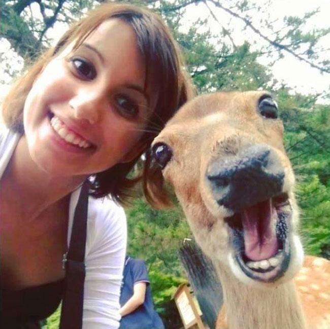別讓鹿太靠近你的相機!不然很有可能發生哭笑不得的意外 2