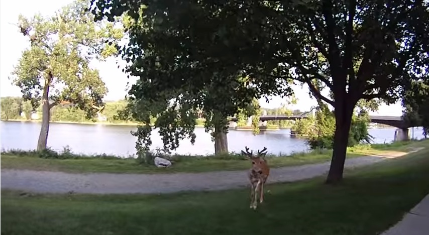 If a Deer Starts Licking Your Camera Lens, You're Probably a Little Too Close 1