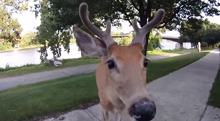If a Deer Starts Licking Your Camera Lens, You're Probably a Little Too Close 2