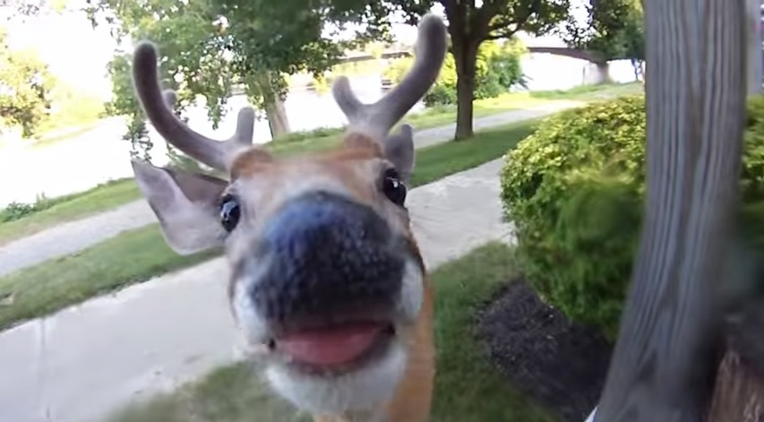 If a Deer Starts Licking Your Camera Lens, You're Probably a Little Too Close 3
