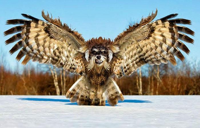 13 Ferocious Hybrid Animals to Creep You Out 1