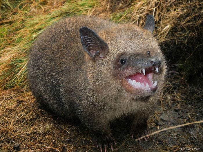 13 Ferocious Hybrid Animals to Creep You Out 3