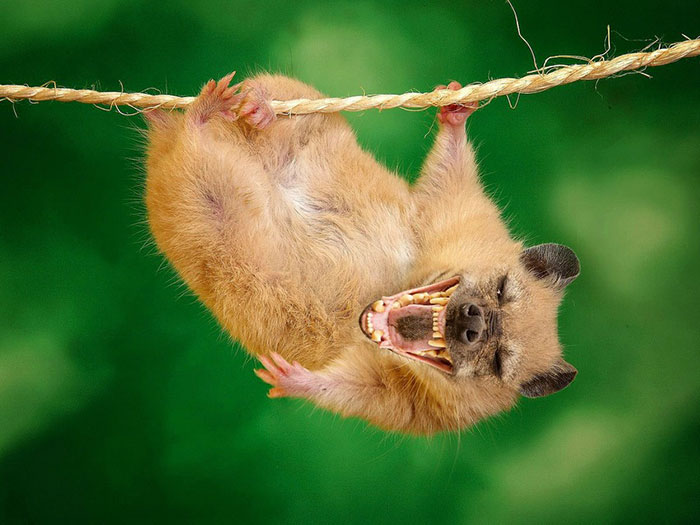 13 Ferocious Hybrid Animals to Creep You Out 10