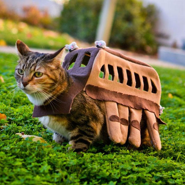 與寵物一起逛街的願望要實現了!就在明天一起萬聖節變裝吧~貓咪! 4
