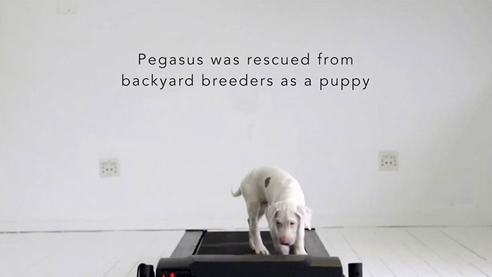 Watch Rescued Puppy Pegasus Growing Up In This Time-Lapse Video 1